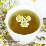 napar z suszonych kwiatów rumianku